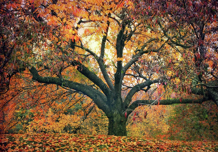 Autumn Glory Photograph