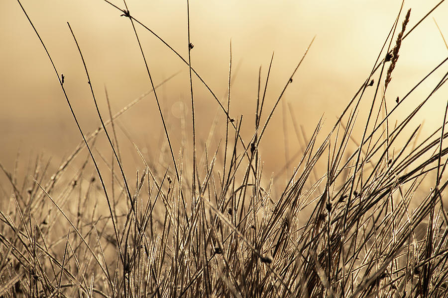 Autumn Grass in Colorado by Kevin Schwalbe