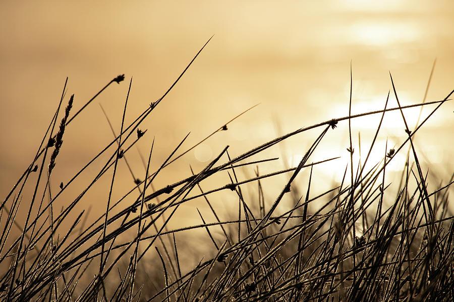 Autumn Grass by Kevin Schwalbe
