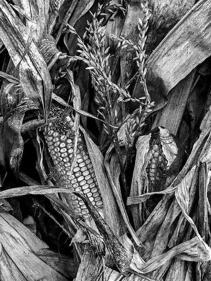 Autumn Harvest 2 Photograph