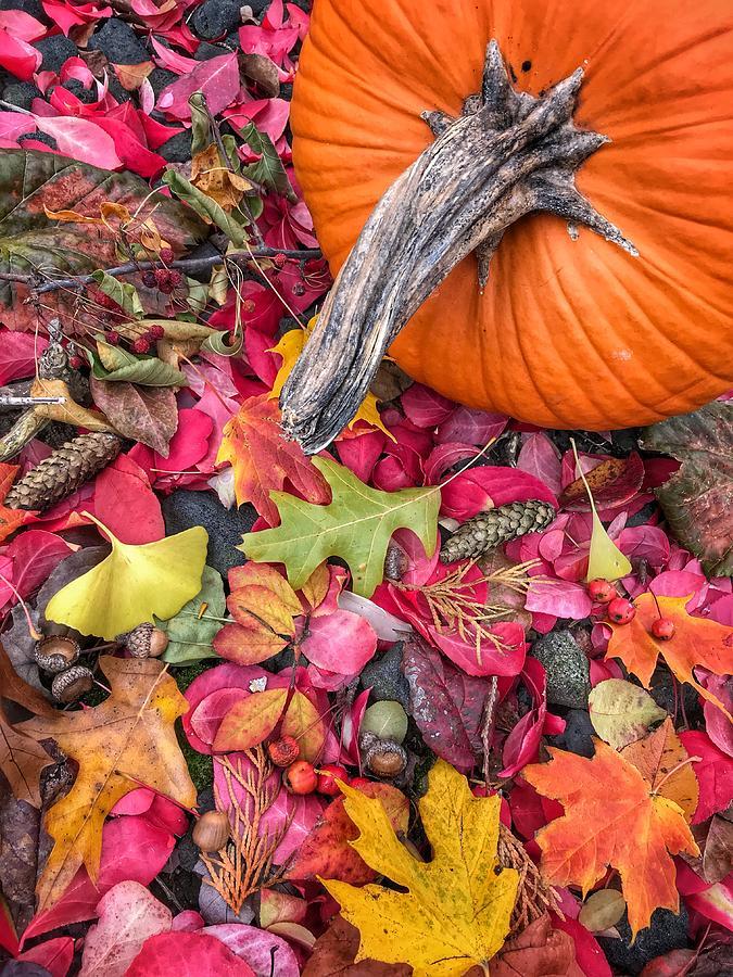 Autumn Harvest Photograph