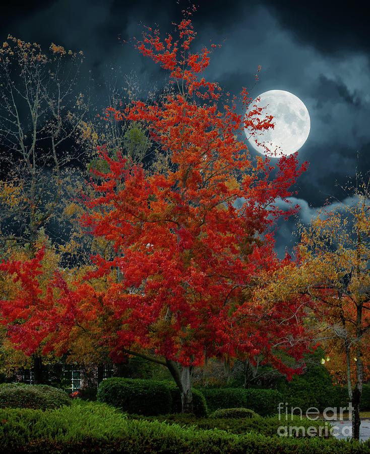 Autumn Harvest Moon Photograph