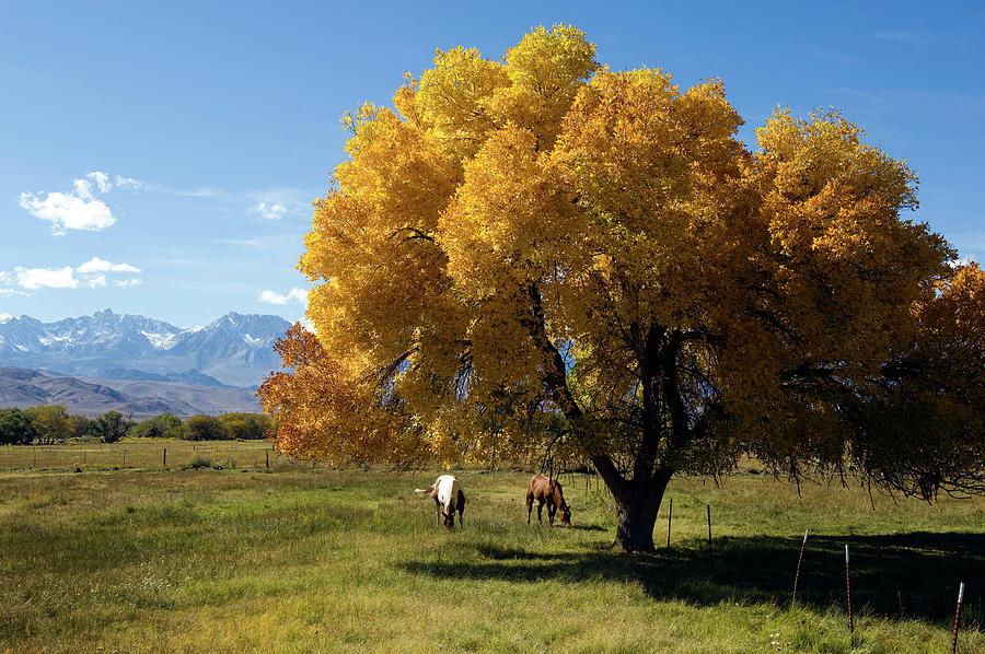Autumn Horses Photograph by Kevinjeon00