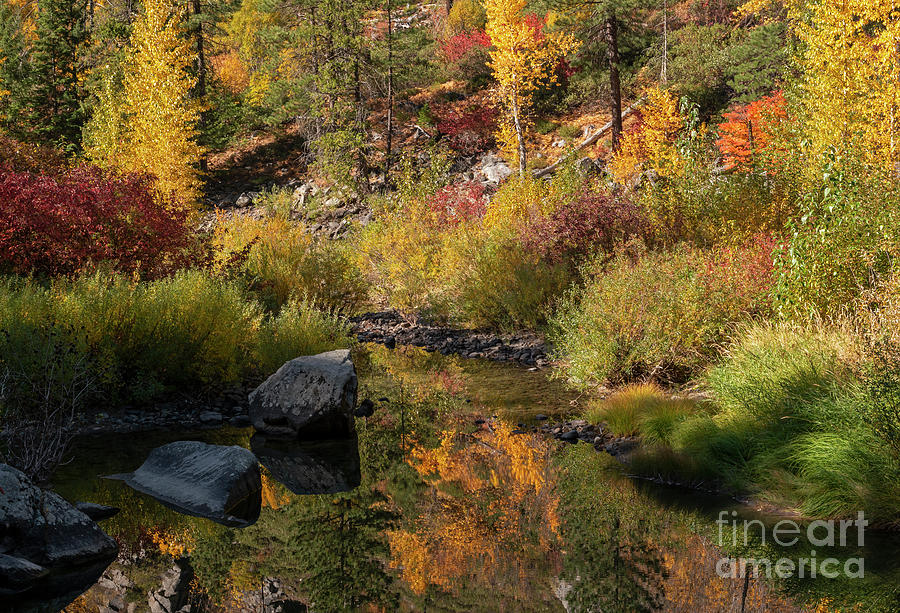 Autumn Ilusions by Mike Dawson