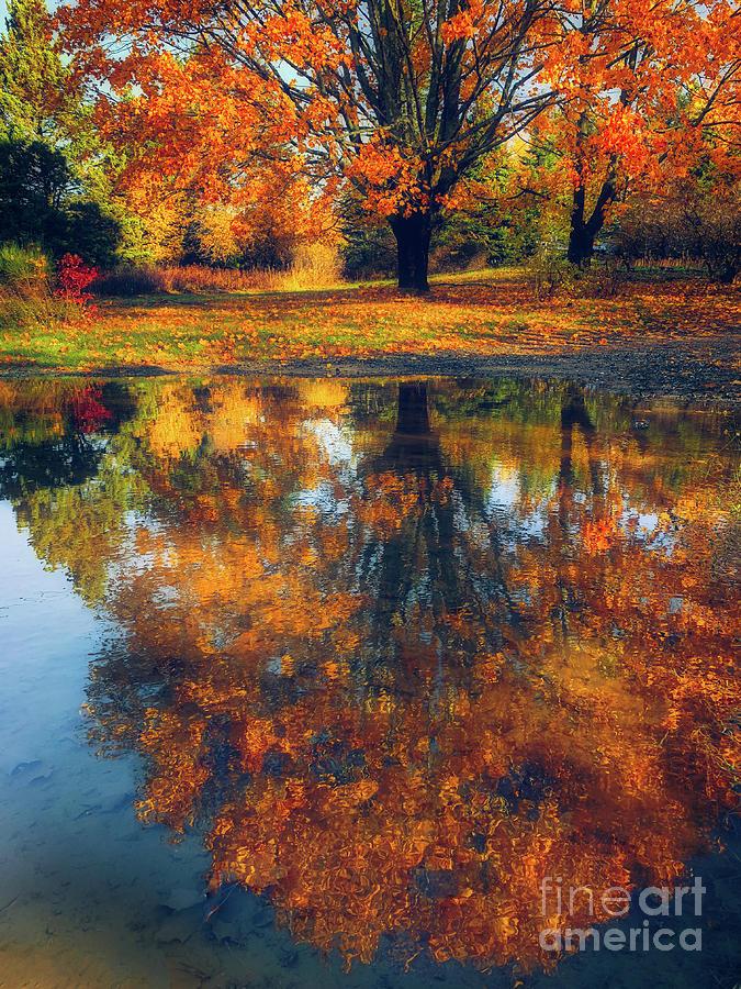 Autumn Impressions by Susan Garver