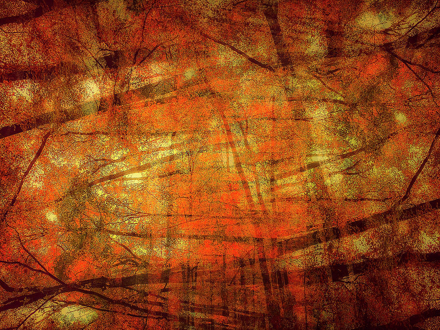 Autumn In Abstract Photograph