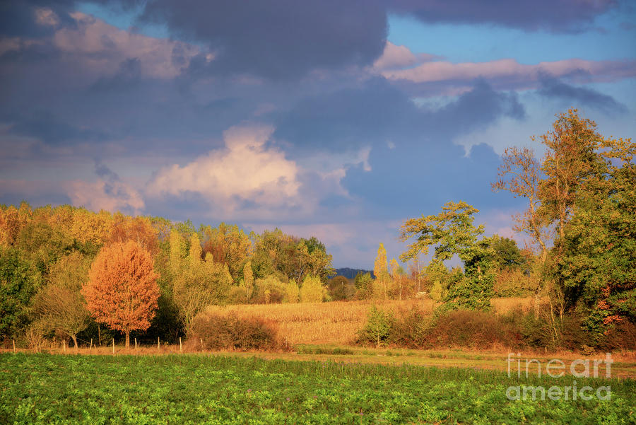 Autumn Photograph - Autumn In Burgundy by Delphimages Photo Creations