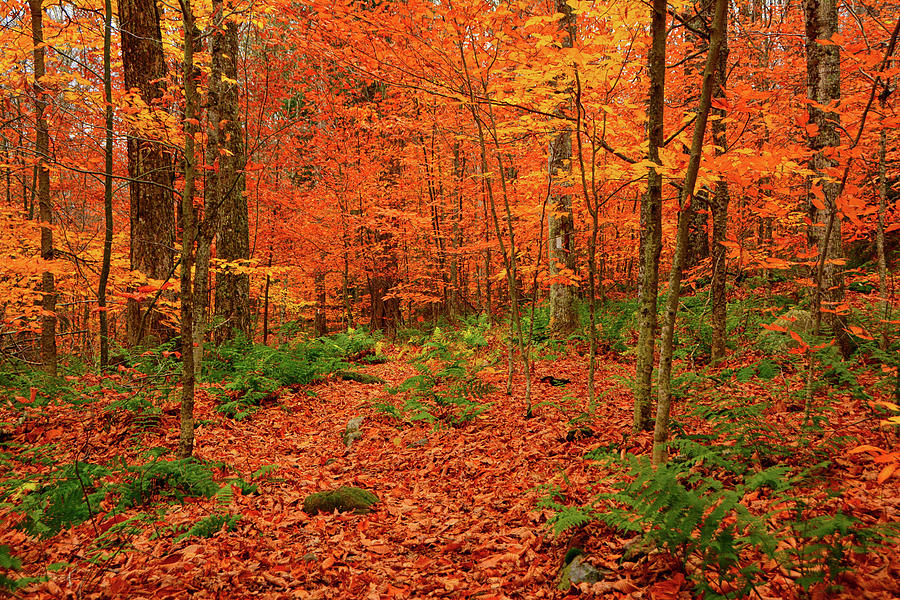 Autumn in Green Mountain Forest by Raymond Salani III