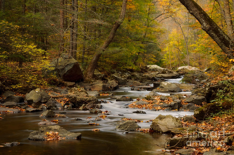 Autumn in Ken Lockwood Gorge by Debra Fedchin