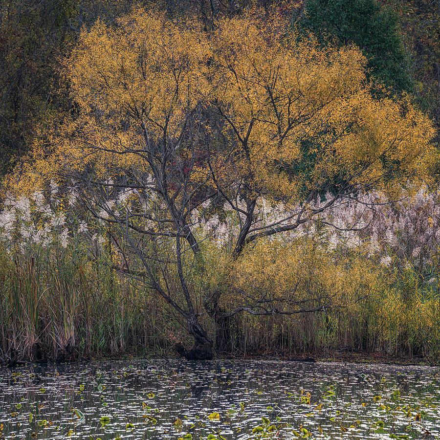 Autumn In Maryland 2 by Robert Fawcett