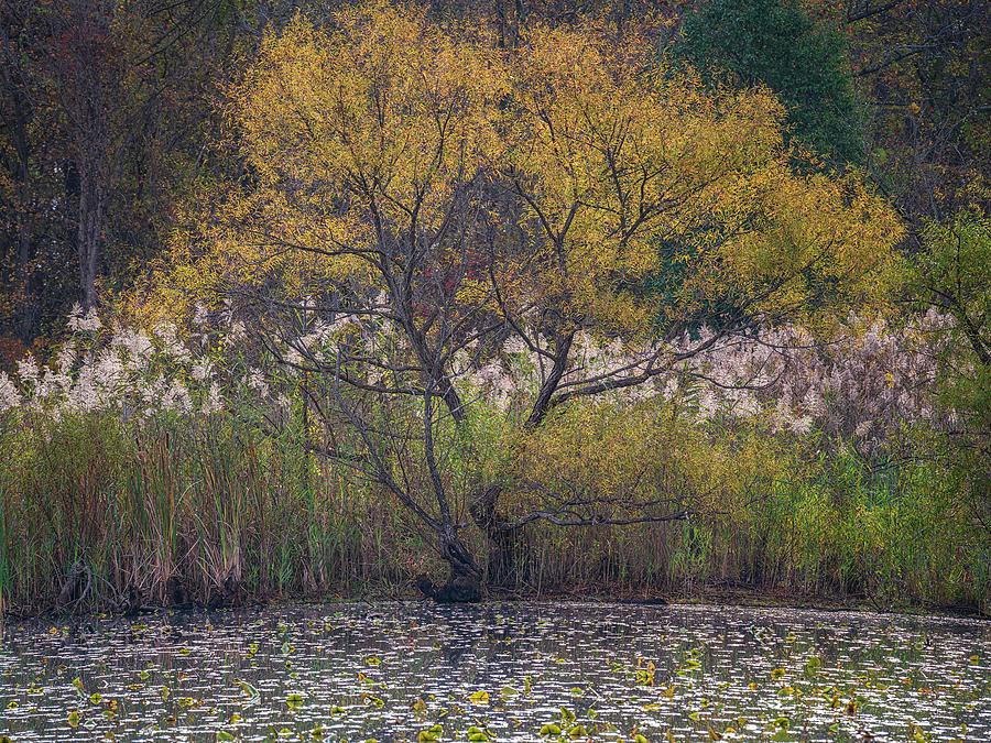 Autumn In Maryland 3 by Robert Fawcett