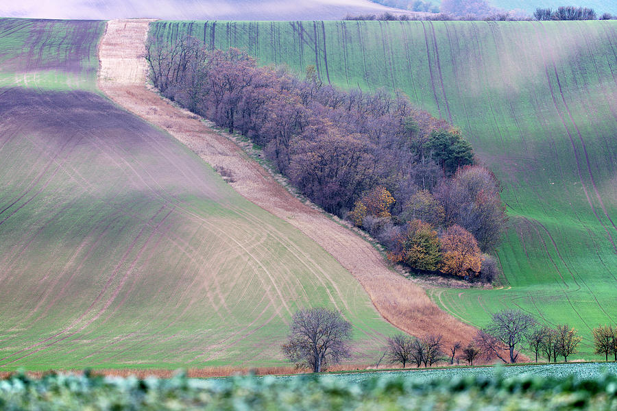 Autumn in South Moravia 10 by Dubi Roman