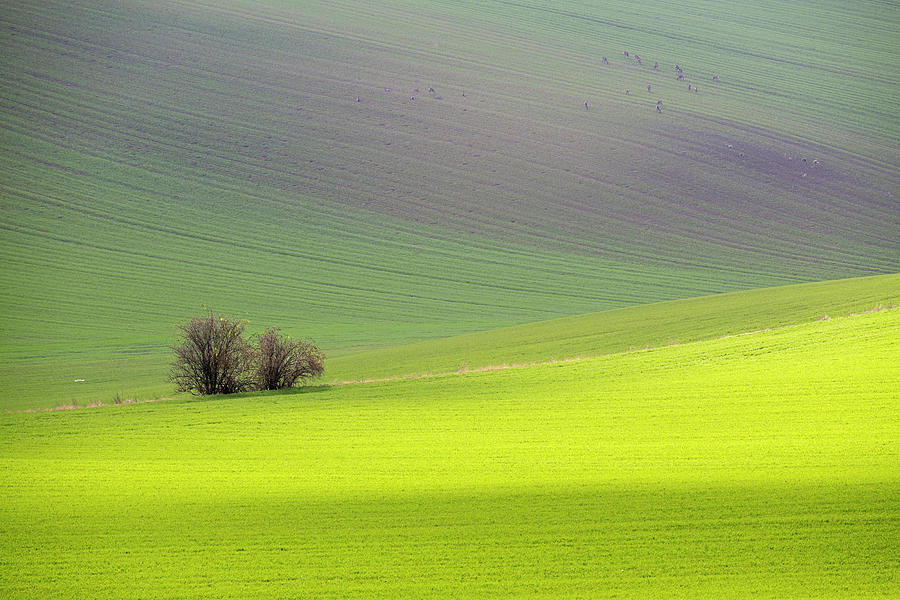 Autumn in South Moravia 13 by Dubi Roman