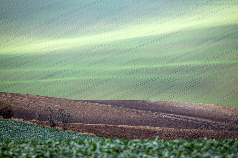 Autumn in South Moravia 4 by Dubi Roman