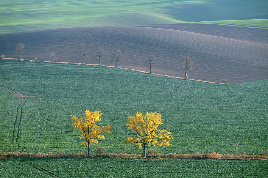 The Chestnut way, Moravia 14 by Dubi Roman