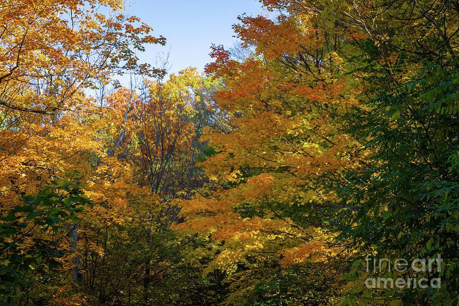 Autumn in New York by William Norton