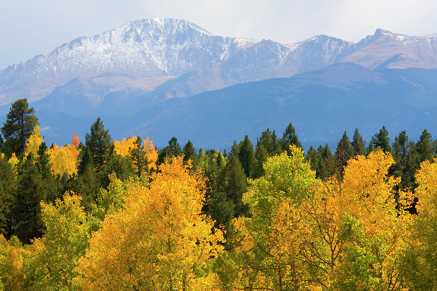 Autumn In Pike National Forest Photograph by Swkrullimaging