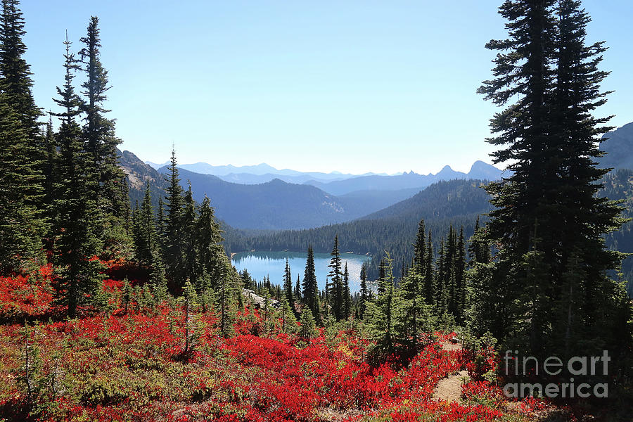 Autumn in the PNW by Sylvia Cook