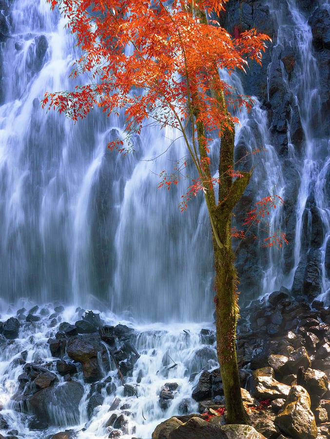 Autumn in the waterfall by Silvia Marcoschamer