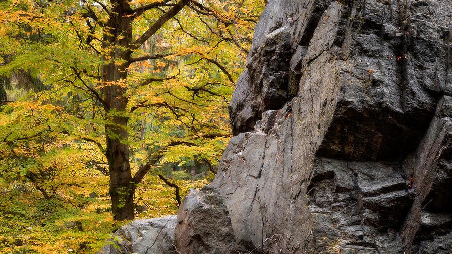 Rock 'n' Tree by Dalibor Hanzal