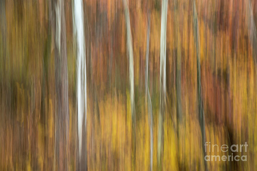 Sycamore Photograph - Autumn  by Joe Sparks