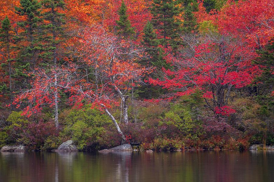 Autumn Lake Edge by Irwin Barrett