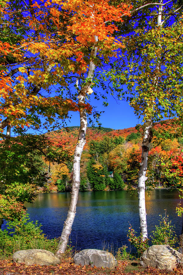 Autumn Lake View by Joann Vitali