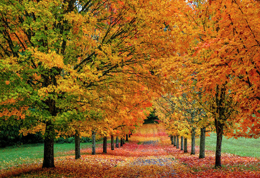 Autumn Lane by Wes and Dotty Weber