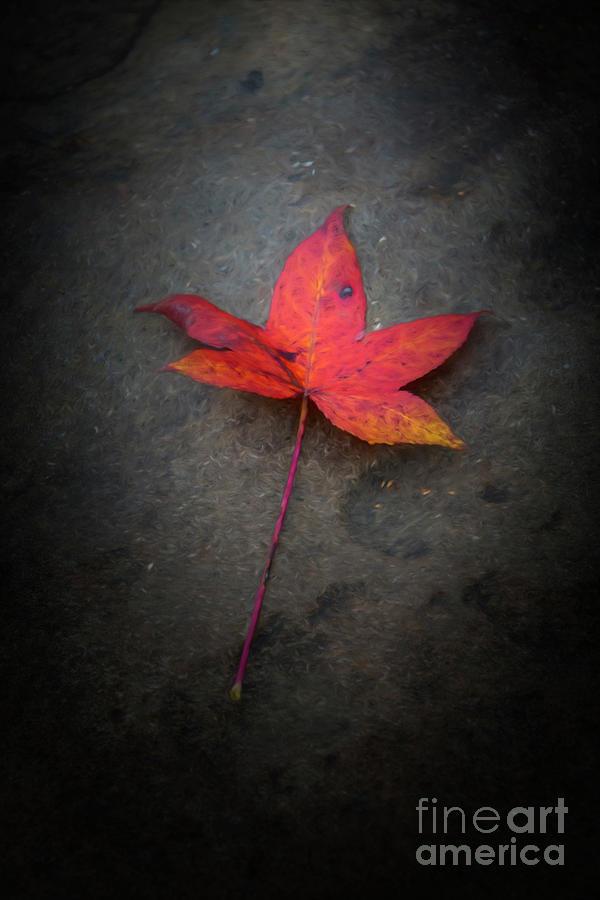 Leaf Photograph - Autumn Leaf by Joe Sparks