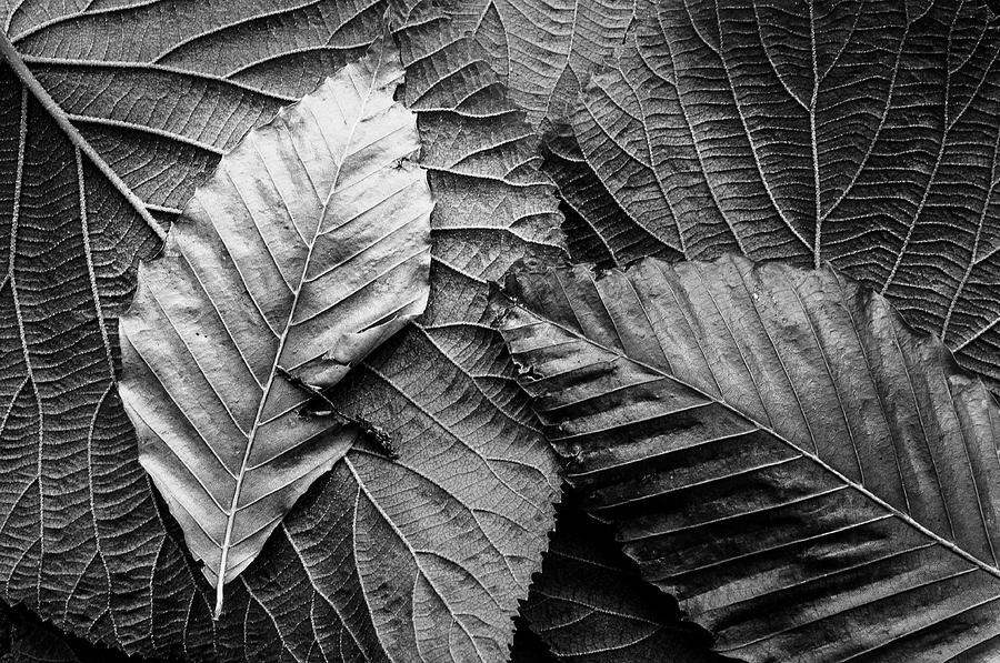Autumn Leaf Patterns by Bob Grabowski