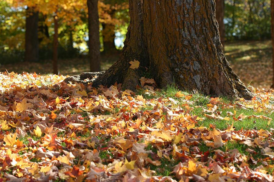 Autumn Leaf-Strewn by AJP