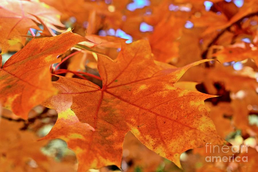 Autumn Leaves #3 by Gem S Visionary