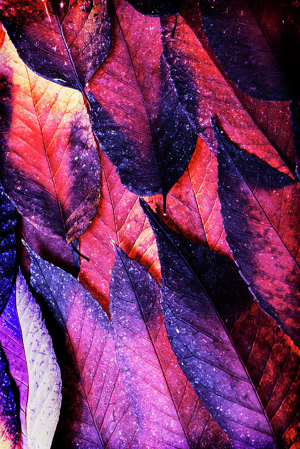 autumn leaves abstract by Vishwanath Bhat