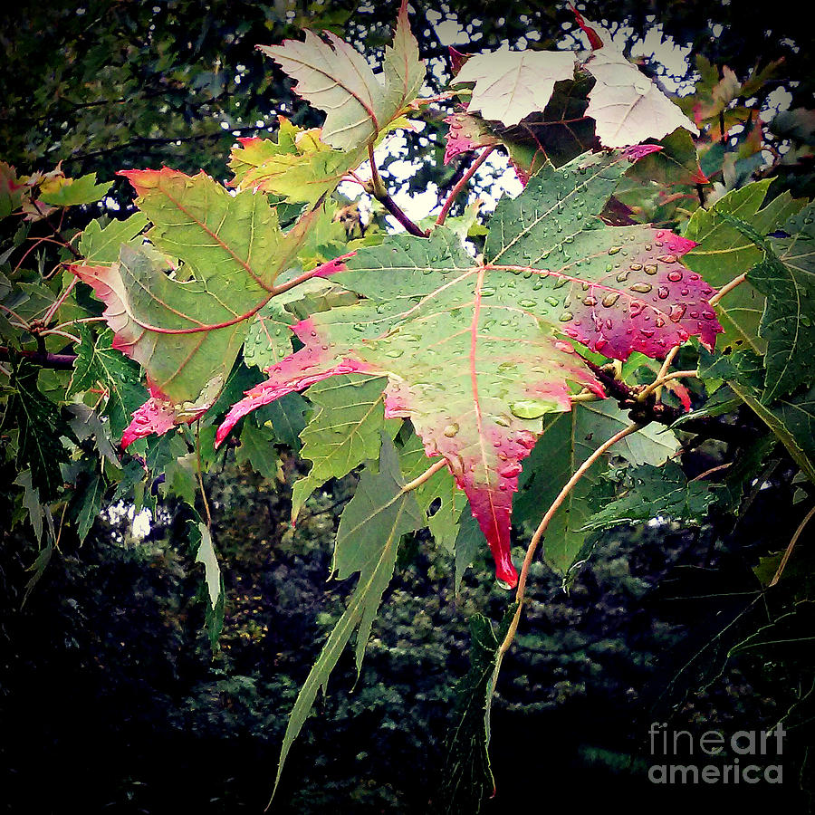 Autumn Leaves And Raindrops Photograph