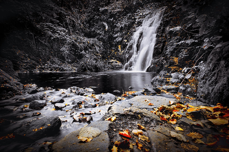 Autumn Leaves at Glenoe by Alan Campbell