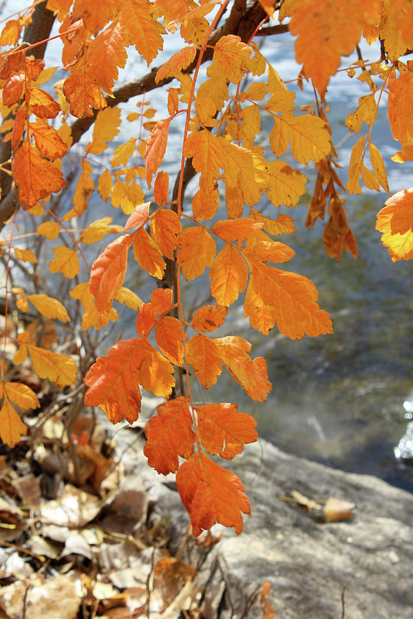 Autumn Leaves by Ellen Tully