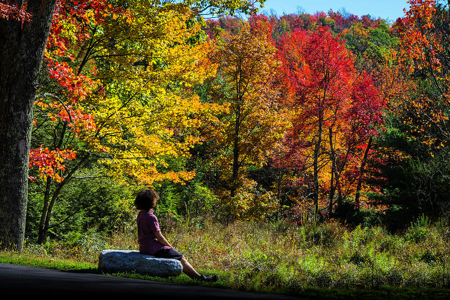 Autumn Leaves in the Catskill Mountains by Kenneth Cole