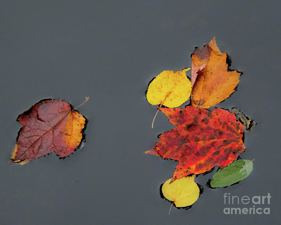 Autumn Leaves by John Greco