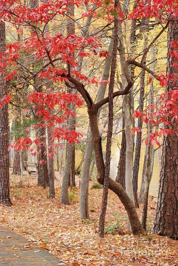 Autumn Leaves by Kathleen K Parker