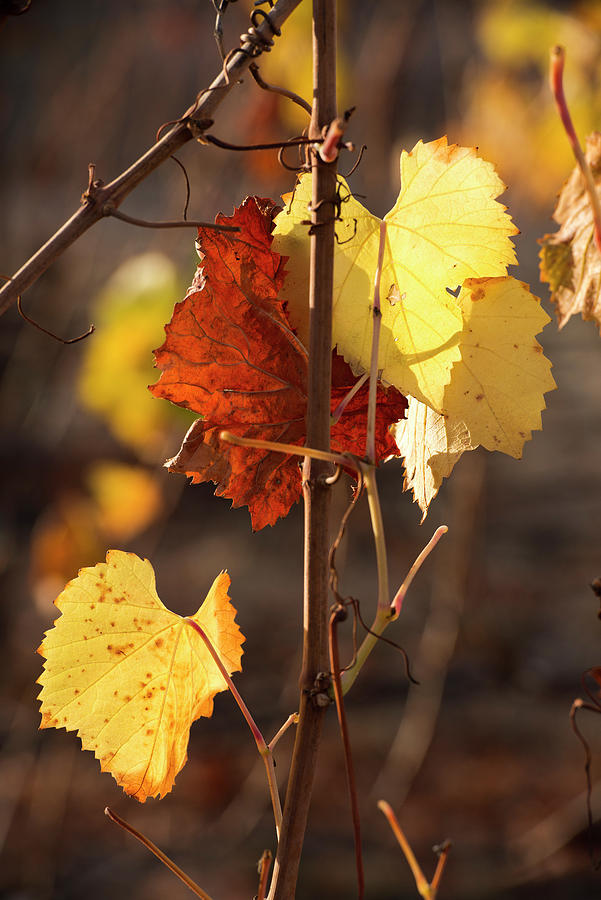 Autumn Photograph - Autumn Leaves by Lance Kuehne