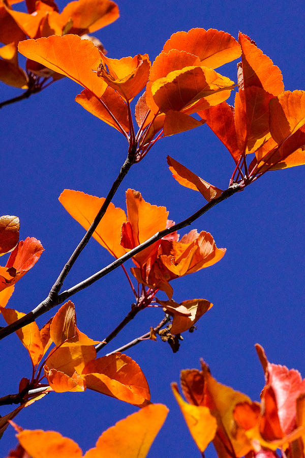 Autumn Leaves Photograph by Mark MIller
