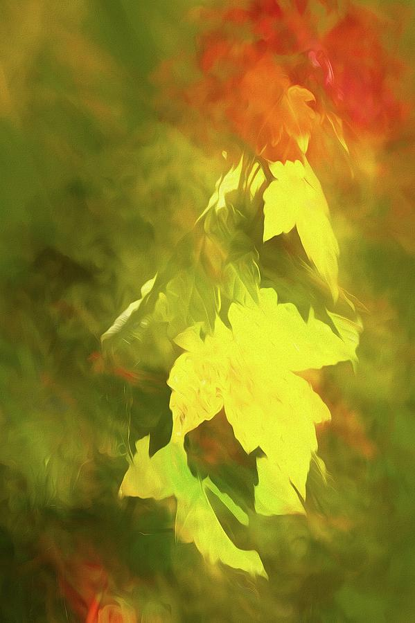 Autumn Leaves No 2 by Steve DaPonte