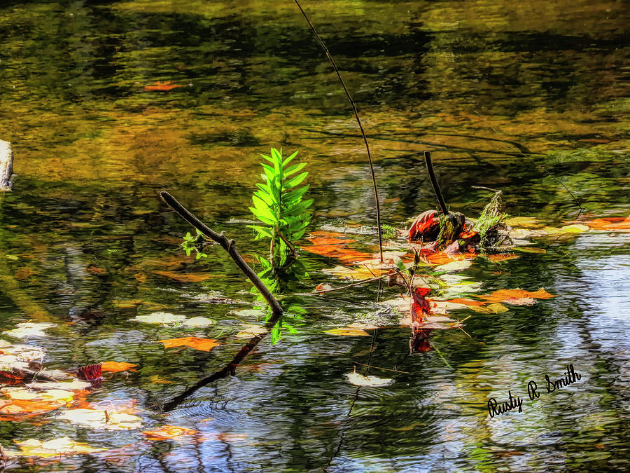 Autumn leaves on the water. by Rusty R Smith