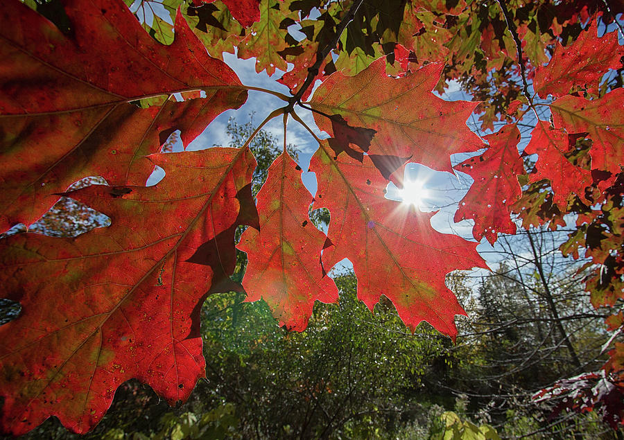 Autumn Leaves - Scarborough Bluffs - Ontario, Canada by Spencer Bush