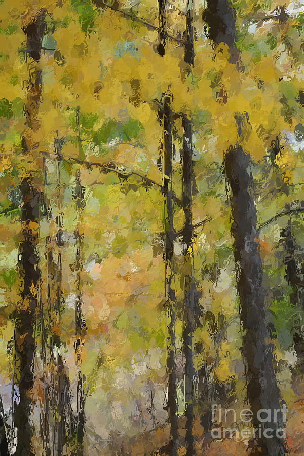 Forest Digital Art - Autumn Light by David Boudreau