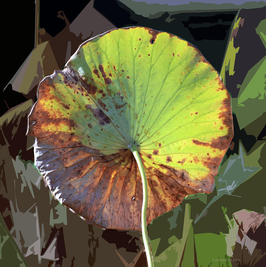 Lotus Leaf Photograph - Autumn Lotus Leaf Two by John Lautermilch
