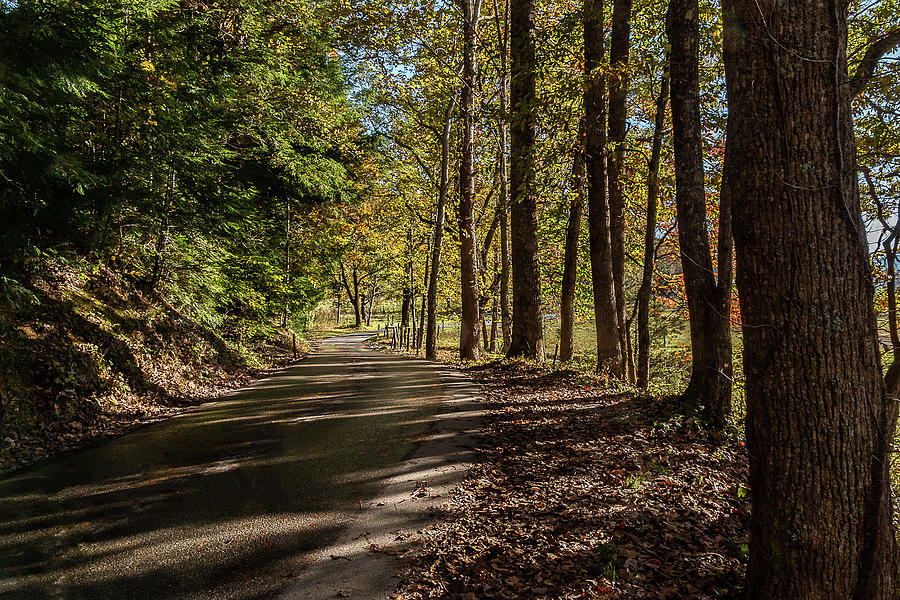 Autumn Morning Drive by Douglas Tate