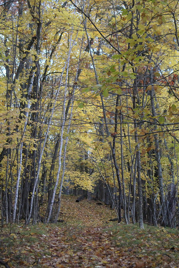 Wisconsin Photograph - Autumn Morning, Lake Amnicon by Callen Harty