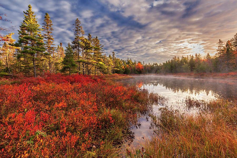 Autumn Morning Mist On Frasers Pond by Irwin Barrett