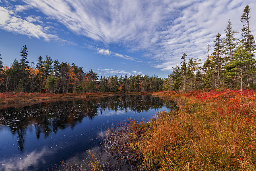 Autumn Morning On Frasers Pond by Irwin Barrett
